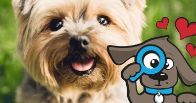 Wat zijn de kosten voor sterilisatie van je hond? • Tinki.nl